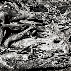 Driftwood X 3, Which one works?