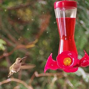 Help! Humming Bird Hell.......