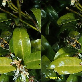 A few insects in-flight cross-view pictures.