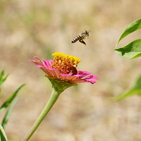 Some insects around flowers