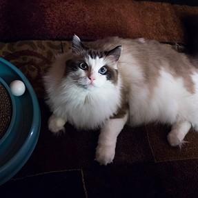 :-)) Sunday Cat! #423 November 8, 2015 ((-: