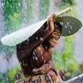 Orangutan photo snags Sony World Photo prize for DPR reader