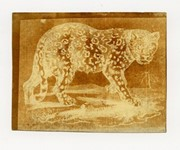 Photography campaigners close to saving Fox Talbot archive