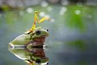 Little beauty: Nordin Seruyan's macro images