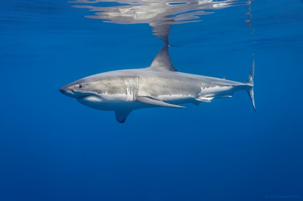 Photographing sharks