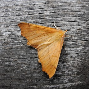 Moths with the P7700