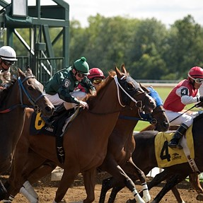 A few horse racing shots with my E-1 and 50-200ED...