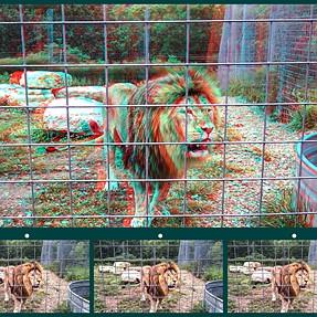 National Tiger Sanctuary 3D photos
