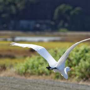 GWE in flight
