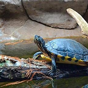 NC Zoo, Asheboro, NC