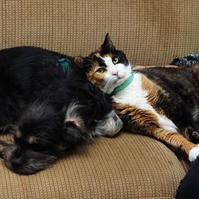 :-)) Sunday Cat! #375 Dec 7, 2014 ((-: