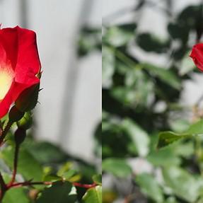 Flowersres - Cross-eyes with Olympus OMD-EM10 - lens Pentax 50mm f1.7