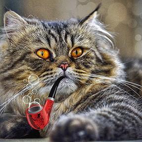 :-)) Sunday Cat! #405 July 5, 2015 ((-: