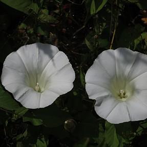 S110 - Field flowers