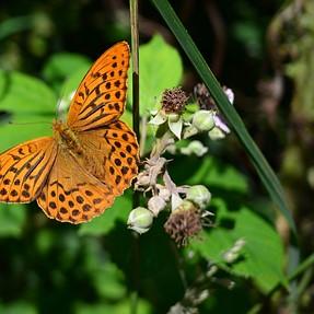 Coolpix A - butterfly