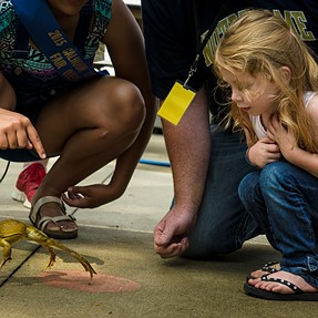 A99 w/24-70mm f/2.8 ZA, Frog Jumping Contest At The Fair