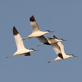 Few wetland birds
