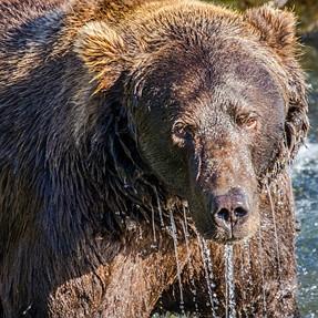 First Bear Shots