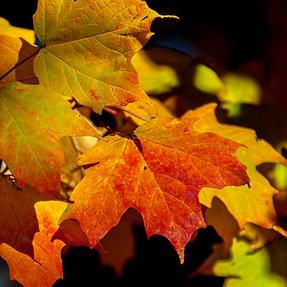 Fall tree photos