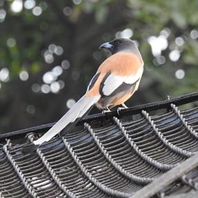 P900 - Visit to Bird Sanctuary