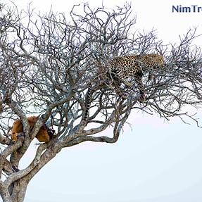 Lets hang out - from Masai Mara
