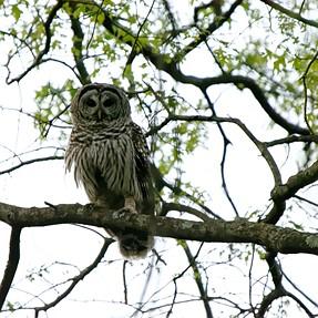 Huntley Meadows VA Wildlife