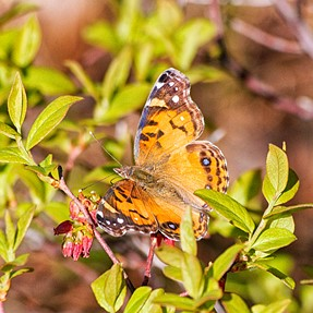 Butterfly's and Birds