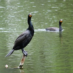 A Rushed Walk Through the Wetland Preserve