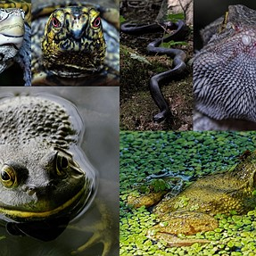 Creatures from the Trailside, Lakeside and Riverside