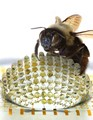 Engineers eye-up insect biology as inspiration for curved camera